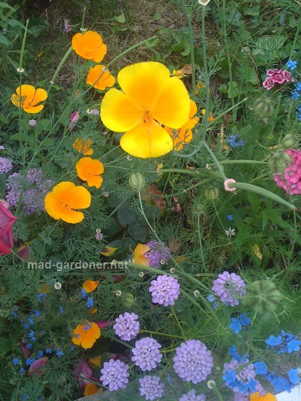 melange-de-fleur