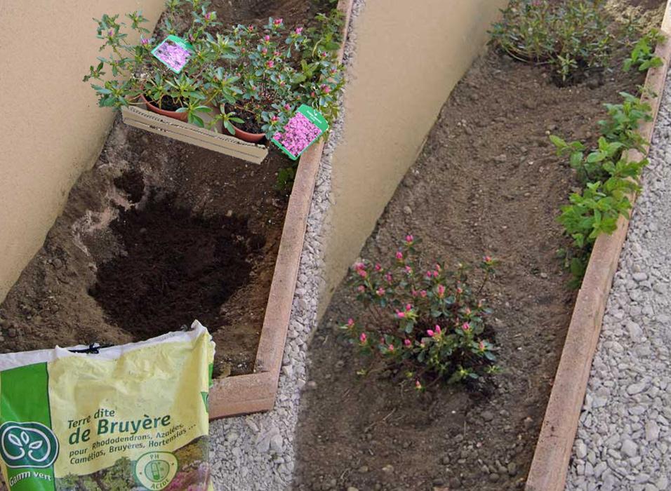 planter-azalee