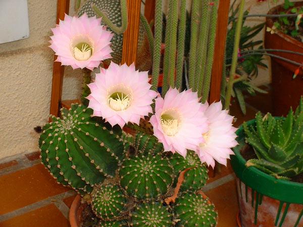cousin-belle-mere-fleurs