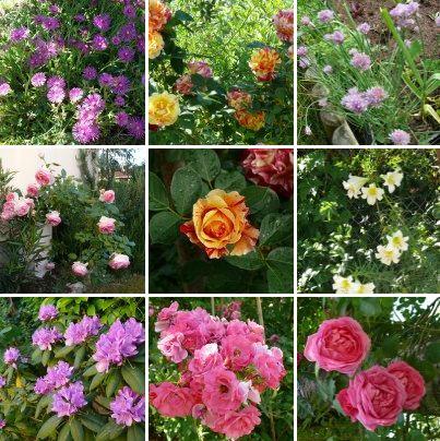 fleur-été