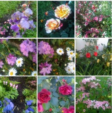 floraison-printemps